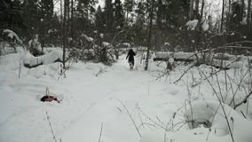 Девушка в лесе зимы игрушка для лайки породы собаки акции видеоматериалы