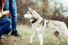 Девушка в парке их дом с лайкой собаки Девушка с Стоковое Изображение