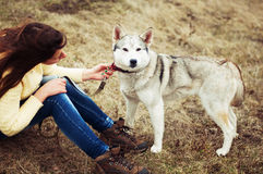 Девушка в парке их дом с лайкой собаки Девушка с Стоковое фото RF