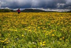 Девушка в поле одуванчика Стоковые Фотографии RF