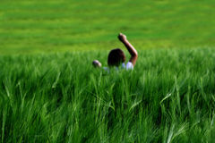 Девушка в поле пшеницы Стоковые Изображения