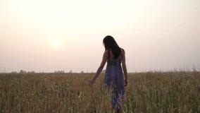 Девушка в поле пшеницы сток-видео