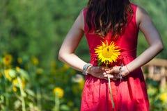 Девушка девушки цветка поля окружающей среды платья ребенка солнцецвета взрослой Стоковые Фото