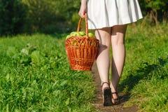Девушка держа большие корзины яблок Стоковое Изображение RF