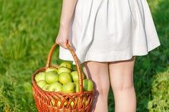 Девушка держа большие корзины яблок Стоковое Фото