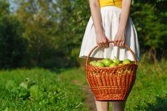 Девушка держа большие корзины яблок Стоковые Фото