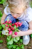 Девушка держа группу красной свежей редиски в саде стоковые изображения rf
