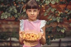 Девушка держа деревянную корзину со зрелыми абрикосами Сбор стоковые фото