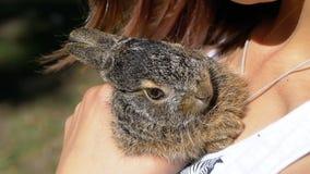 Девушка держит малый одичалый пушистый зайчика младенца Меньший зайчик в ладони движение медленное видеоматериал