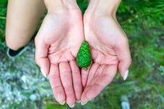 Девушка европейской национальности держит молодой яркий ый-зелен конус o стоковые изображения rf