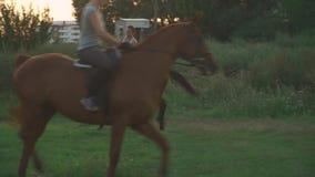 Девушка едет лошадь видеоматериал