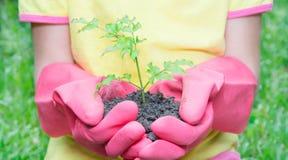 Девушка держа зеленое растение Стоковое Изображение RF