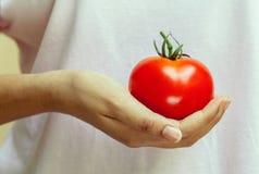 Девушка держа томат Стоковые Изображения RF