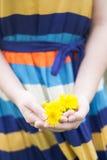 Девушка держит желтые одуванчики в руке Стоковые Изображения