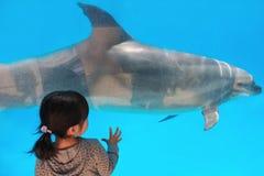 Девушка дельфина наблюдая Стоковые Фото