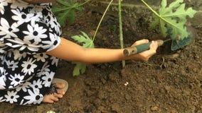 Девушка засаживает дерево сток-видео