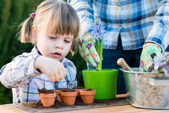 Девушка засаживая шарики цветка Стоковое фото RF