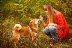Девушка играет с собакой Shiba Inu в парке осени стоковая фотография rf