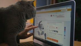 Девушка и великобританский серый цвет кота с компьтер-книжкой Продукты приобретения онлайн для животных акции видеоматериалы