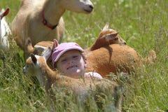 Девушка и ее козы Стоковые Фотографии RF