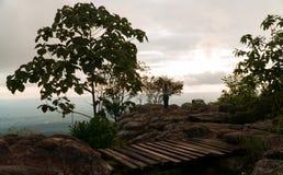 Девушка и дерево на горе стоковая фотография rf