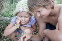 Девушка и мальчик отпрыска держа зеленый богомола в поле лета Стоковая Фотография RF