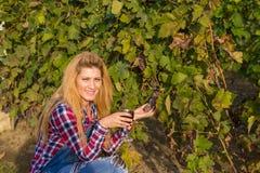 Девушка и парень в винограднике стоковые фотографии rf
