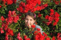 Девушка и розы. Стоковая Фотография RF