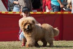 Девушка и собака Стоковая Фотография RF