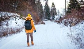 Девушка идя в древесины зимы Стоковое фото RF