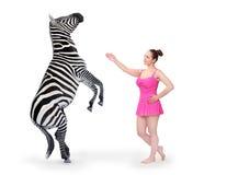 Девушка клоуна выполняя с зеброй в выставке цирка Стоковые Изображения