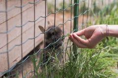 Девушка кормит милые маленькие кроликов стоковые фото