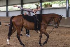 Девушка лошади вольтижируя конноспортивная Стоковые Изображения