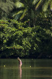 девушка меньшее играя река стоковая фотография rf