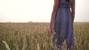 Девушка на заходе солнца в поле акции видеоматериалы
