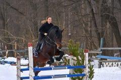 Девушка на лошади скачет над барьером Жокей девушки тренировки ехать лошадь Пасмурный зимний день Стоковые Изображения RF