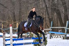 Девушка на лошади скачет над барьером Жокей девушки тренировки ехать лошадь Пасмурный зимний день Стоковое фото RF