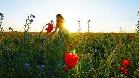 Девушка на полях мака Красные цветки с зелеными стержнями, огромными полями Яркие лучи солнца стоковое фото rf