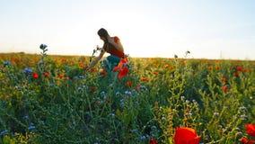 Девушка на полях мака Красные цветки с зелеными стержнями, огромными полями Яркие лучи солнца стоковое изображение rf