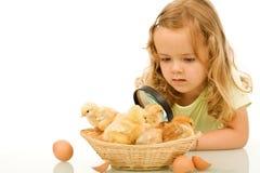 девушка пасхи цыплят немногая изучая Стоковое фото RF