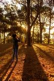Девушка принимала фото в сосновом лесе Стоковые Изображения