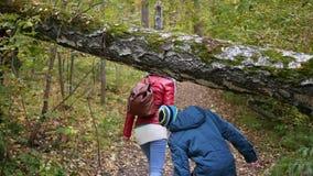 Девушка при парень идя в парк осени Ландшафт осени сток-видео