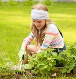 Девушка работая в заводах холить сада стоковые фото