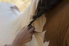 Девушка расчесывая лошадь Стоковое Изображение RF