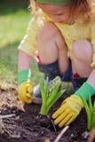 Девушка ребенка в резиновых перчатках засаживая голубой гиацинт весной садовничает Стоковое Фото