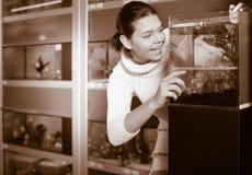 Девушка смотря молодые рыб в аквариуме Стоковое фото RF