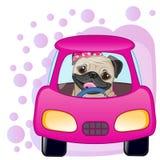 Девушка собаки мопса в автомобиле бесплатная иллюстрация