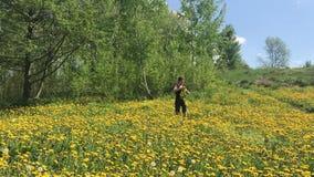 Девушка собирает одуванчики и соткет венок Луг весны перерастанный с цветя одуванчиками Солнечная весна в парке сток-видео
