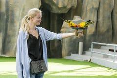Девушка с делать попугая фокусов на выставке Вьетнаме ` s птицы стоковое изображение