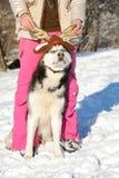 Девушка с ее милой лайкой собаки на прогулке Стоковое Фото